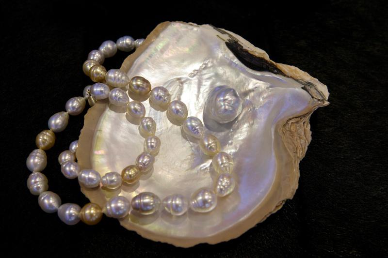 Western Australian pearls from the Kimberley