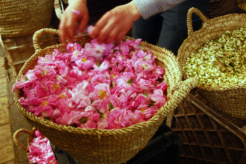 Festival of Roses Morocco