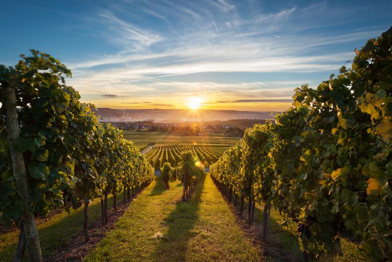 Okanagan Valley sunset over vineyard