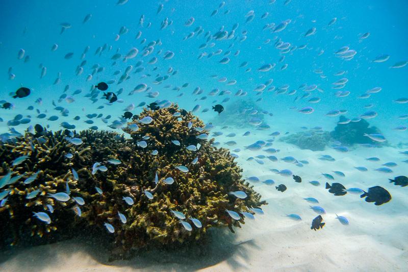 Underwater view in the waters surrounding the Kerama Islands