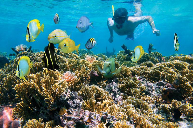 Snorkeling, Caribbean sea