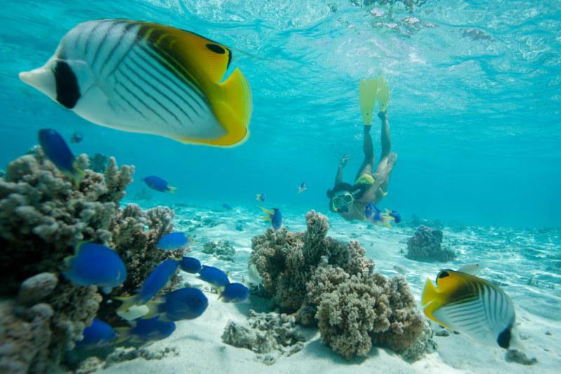 Snorkelling Cook Islands