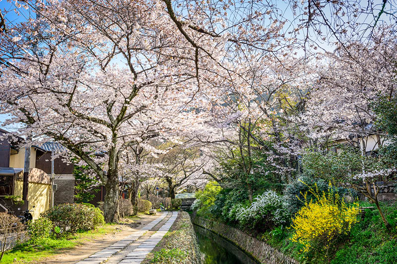 Kyoto, Japan at Philosopher's Walk in the spring