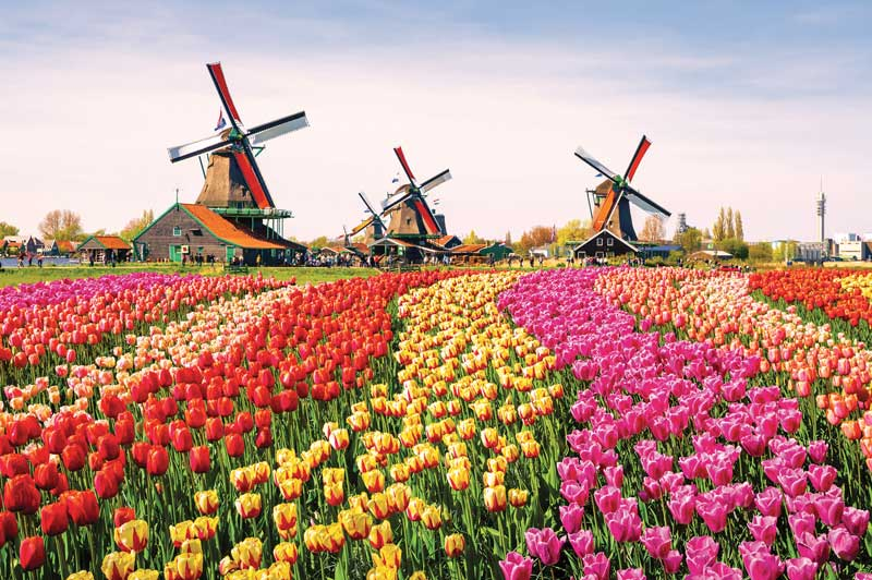 Tulip Festival, The Netherlands