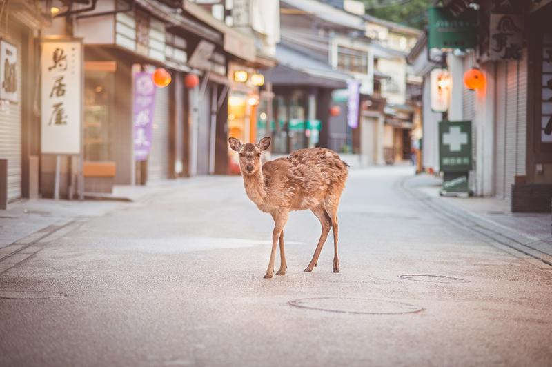 Miyajima, Old Town