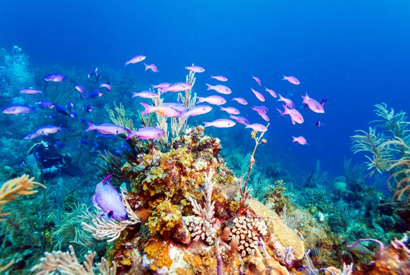 Coral Cuba scuba diving.