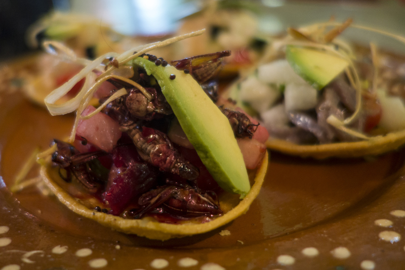 local food in mexico - grasshopper tostada
