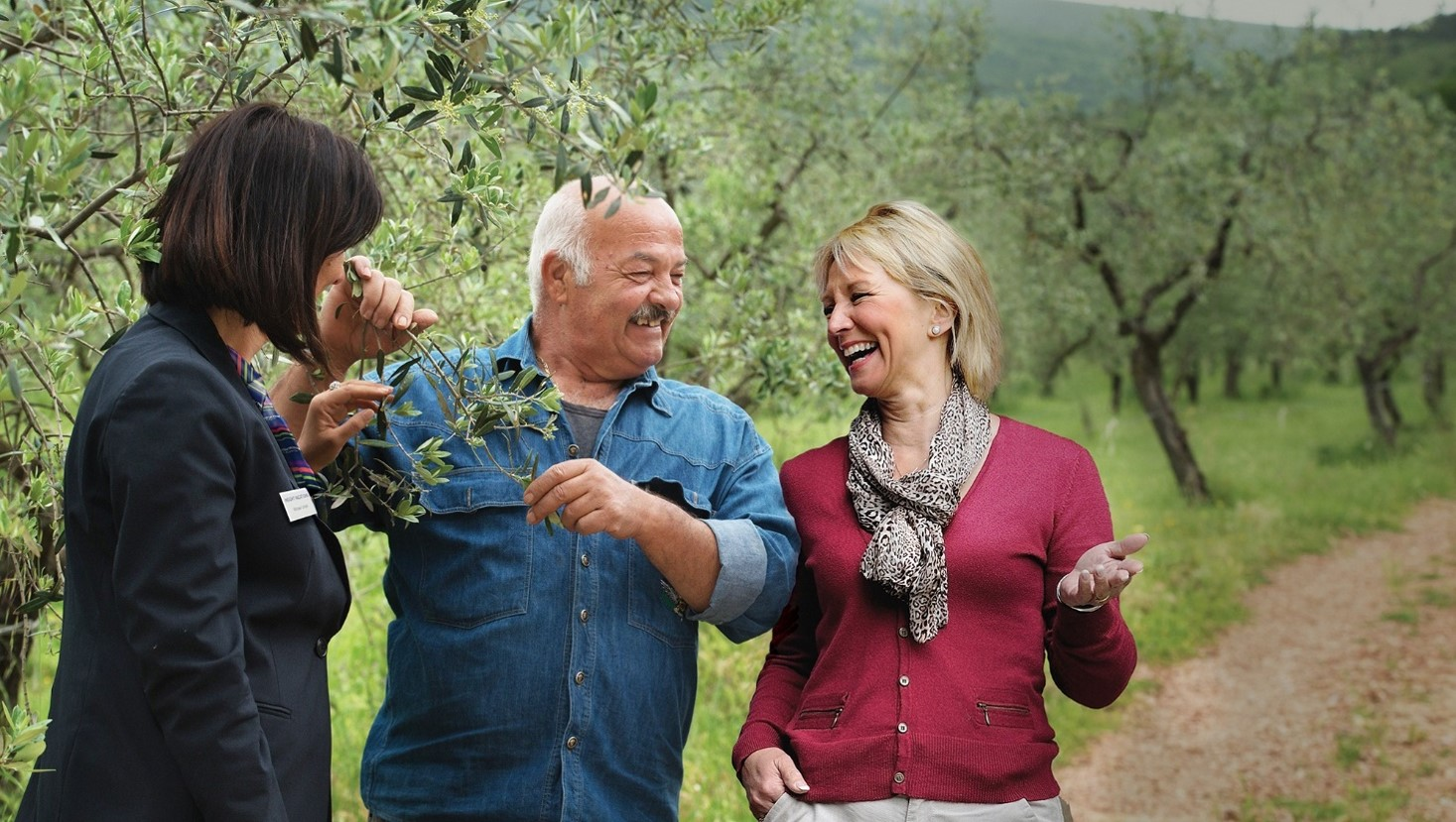 Follow the evolution of the olive, from tree to table, just one of Insight Vacation