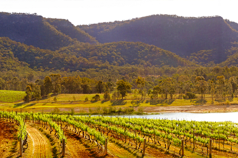 Audrey Wilkinson Vineyard in the Hunter Valley – the nation