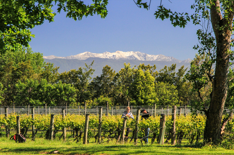 There are more that fifty wineries in the beautiful village of Martinborough. Image: Ata Rangi