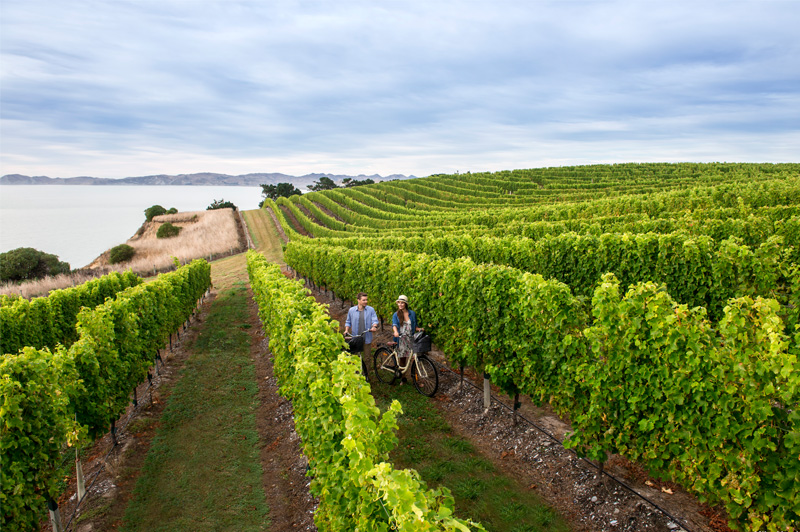 Biking the vines is an easy way to explore Marlborough