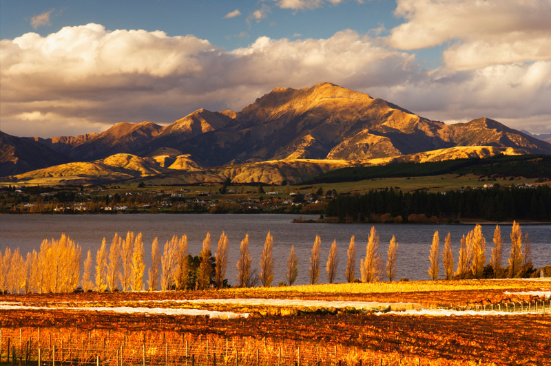 Vineyard and Lake Wanaka in Central Otago. Image: Jochen Schlenker