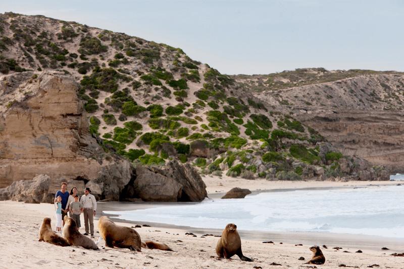Seal Bay Conservation Park. Image: South Australian Tourism Commission