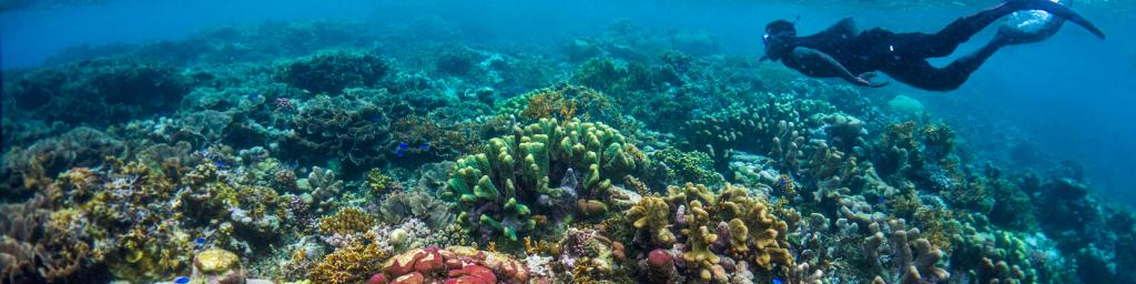 Diving in the Solomon Islands