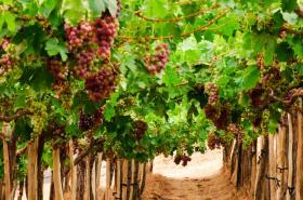 Chilean wine regions