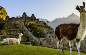 Llama in front of inca ruins
