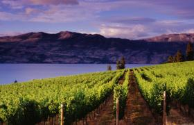 Kelowna BC vineyard