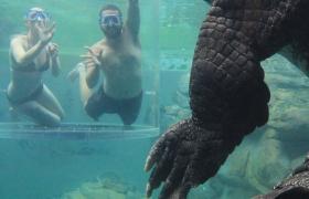 Dive with giant crocodiles at Crocosaurus Cove