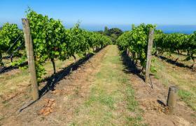 cycle vineyards