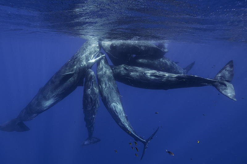 The Humpback whales can be spotted off the West coast of Mauritius between July and November.